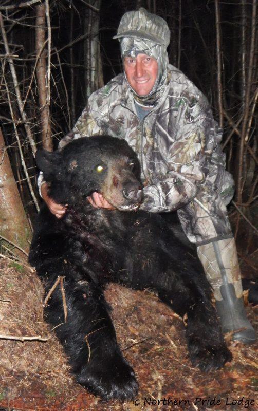 Dave's bear dressed 245 lbs